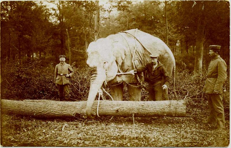 elephant_bois_leveque_1914_1918_2.jpg
